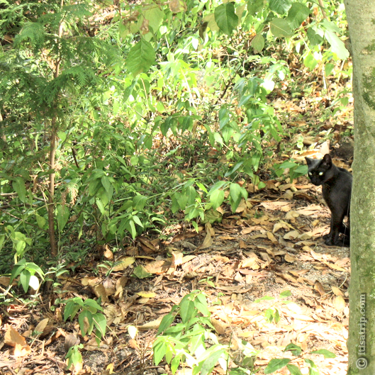 Black cat behind tree